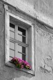 Oud huisvenster met bloemen Royalty-vrije Stock Afbeeldingen