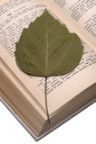 Oud kookboek en droog blad royalty-vrije stock fotografie