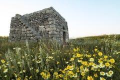 Oud landelijk huis in salento met een mooi gazon van bloemen - Italië Stock Foto's