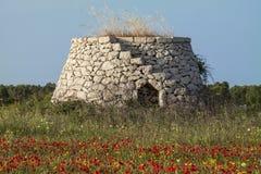 Oud landelijk huis van zuidelijk Italië met een papaverweide - Salento - Italië Royalty-vrije Stock Fotografie