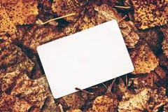 Oud leeg adreskaartje in de herfstbladeren Stock Afbeeldingen