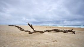 Oud lidmaat op de witte duinen van Sao Jacinto stock fotografie