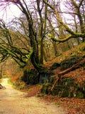 Oud mos behandeld bos in het Nationale Park van Exmoor stock foto's