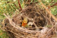Oud nest met een gebarsten ei bij zonsondergang in mijn tuin stock foto