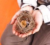 Oud nest zonder eieren Royalty-vrije Stock Afbeelding