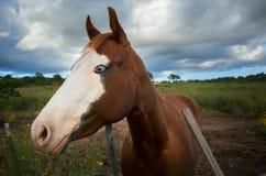 Oud Paard op een Landbouwbedrijf Stock Foto