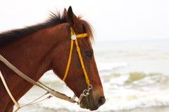 Oud paard in open land Royalty-vrije Stock Foto