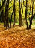 Oud park in de kleuren van de herfst Stock Afbeeldingen