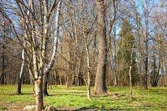 Oud park in een fijne vroege de lentedag Stock Foto