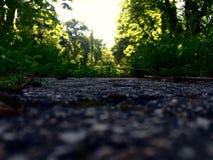 Oud park in een Russisch bos Stock Foto's