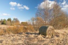 Oud riet en bewolkt blauw hemellandschap stock foto