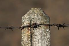 Oud roestig prikkeldraad op een concrete post Royalty-vrije Stock Foto