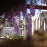 Oud Rome, Italië door bomen Stock Afbeeldingen