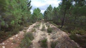 Oud spoor tussen het bos van de pijnboomboom stock videobeelden