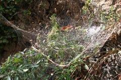Oud stoffig spinneweb in een bos stock foto's