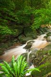 Oud tropisch bos met waterval in regenachtig Verse flora, Ne stock afbeeldingen