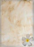 Oud uitstekend document met bloem Stock Foto's