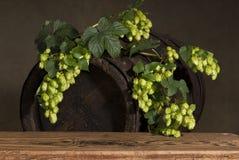 Oud vat met hop royalty-vrije stock foto