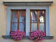 Oud venster met bloemen Stock Foto