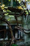Oud venster op de achtergrond van verdraaide installaties, vrije ruimte voor tekst Royalty-vrije Stock Fotografie