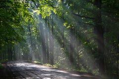 Oud vergankelijk bos met lichtstralen het binnengaan royalty-vrije stock foto's