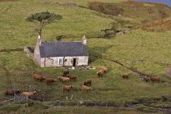 Oud verlaten huis in Noord-Schotland Stock Foto's