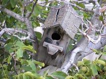 Oud vogelhuis op boomfig. royalty-vrije stock afbeeldingen
