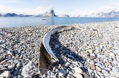 Oud walvisbeen op de kust van Svalbard, Noordpool Stock Foto