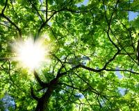 Oud wijf van de boom en de zon Stock Afbeelding