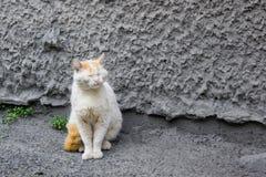 Oude, aan flarden kat-bedelaar. royalty-vrije stock afbeeldingen