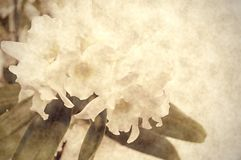 Oude achtergrond met orchideebloemen Stock Afbeelding