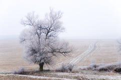 Oude alleen boom met de weg royalty-vrije stock foto's