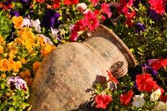 Oude amfora tussen bloemen Stock Foto's