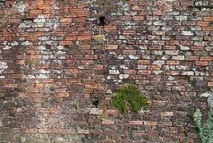 Oude bakstenen muur Stock Foto's