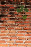 Oude bakstenen muur en bladeren Stock Fotografie