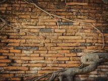 Oude bakstenen muur en wortel Stock Foto's