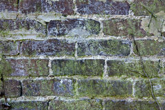 Oude bakstenen muur met vorm en korstmossen Royalty-vrije Stock Foto's