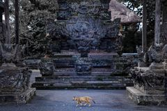 Oude Balinese tempel stock foto's