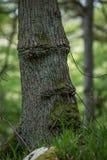 Oude bemoste boomstam dichtbij de weg Stock Foto