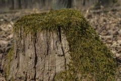 Oude bemoste boomstomp stock afbeeldingen