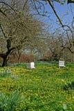 Oude Bijenbijenkorven in een Boomgaard Stock Fotografie