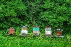 Oude bijenkorven Stock Afbeelding