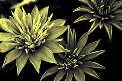 Oude bloem royalty-vrije stock afbeeldingen