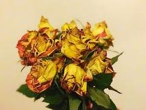 Oude bloemen Stock Foto's