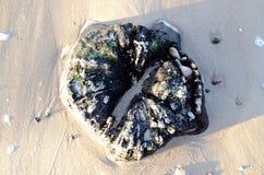 Oude boeg, boomboomstam op het strand stock foto's