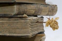 Oude boeken in bibliotheek. stock foto's