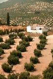 Oude Boerderij in Spanje Stock Foto's