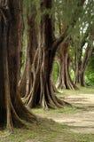 Oude bomen Royalty-vrije Stock Foto