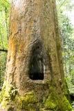 Oude bomen. Royalty-vrije Stock Fotografie