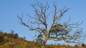 Oude bomen Royalty-vrije Stock Afbeelding